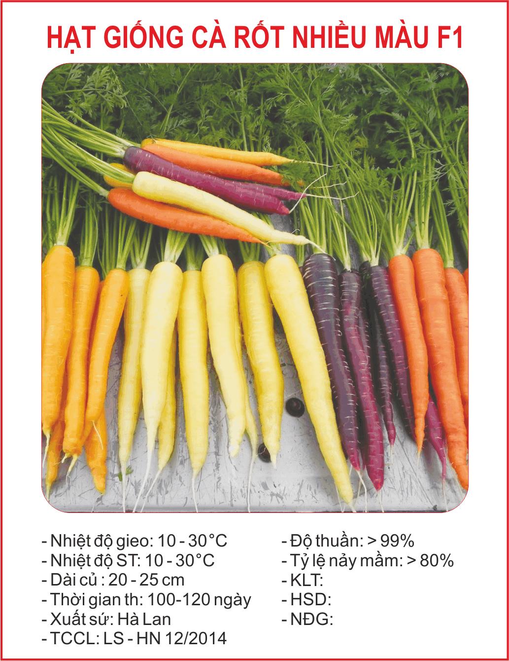 Hạt giống cà rốt